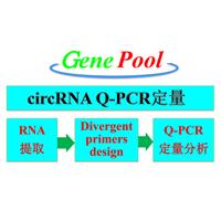 circRNA荧光定量PCR